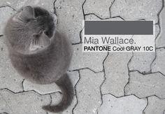 Mia pantone cool gray