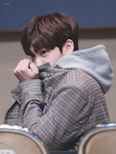 yuvin Music Words, Boy Idols, Boy Meets, Fandom, Asian Actors, Mingyu, Boyfriend Material, Monsta X, My Boyfriend