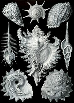 "UrbA // ActU: ""Art Forms of Nature"", The Ernst Haeckel Collection"