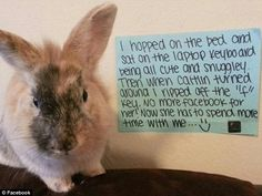 First there was dogshaming... now bunny shaming takes web by storm as owners post hilarious pictures of their naughty rabbits next to the destruction they have caused | Mail Online