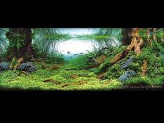 Tree Roots Aquascape by StarMeKitten