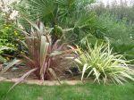 jolies couleurs devant les palmiers