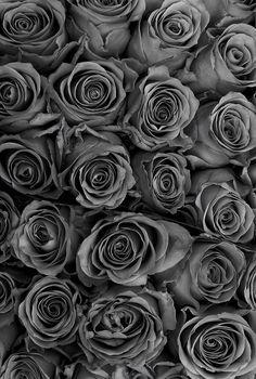 Flower Background Wallpaper, Flower Phone Wallpaper, Wallpaper Iphone Cute, Flower Backgrounds, Colorful Wallpaper, Black Wallpaper, Flower Wallpaper, Wallpaper Backgrounds, Black Aesthetic Wallpaper