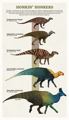 evolution # animal art # animal illustrations # animals Nature is wild! Crazy to think how times a species has evolved, and it's even more insane to think how we're STILL evolving! Prehistoric Wildlife, Prehistoric Dinosaurs, Prehistoric World, Prehistoric Creatures, Evolution, Animal Tumblr, Dinosaur Art, Dinosaur Crafts, Extinct Animals