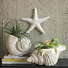 ocean decor | Sea Shell Decor - Betterimprovement.com