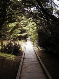 the boardwalk in McKerricker State Park. Located near Fort Bragg, CA. So lovely