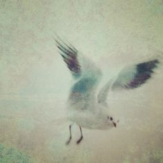 DC:  Look, it's Jonathan Livingston Seagull - I loved that book and love this painting.