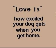 What is <3 ?   #dogquotes