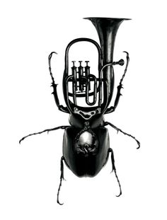musical insects ||| (*d*)
