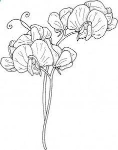 sweet pea watercolor tattoo - Google Search
