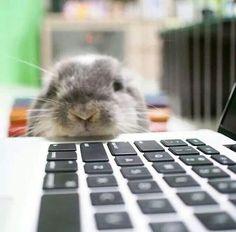 bunny computer