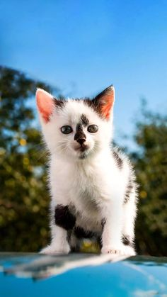 Kittens Cutest, Cute Cats, Raining Cats And Dogs, Puppy Pictures, Cat Lovers, Dog Cat, Wildlife, Puppies, Nature