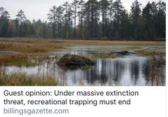 Guest opinion: Under massive extinction threat, recreational trapping must end Animal Species, Endangered Species, Beaver Trapping, Human Well Being, Plant Species, One In A Million, Ecology, Continents, Habitats