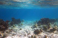 Left Reef Cut - Mangel Halto