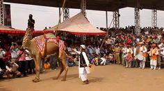 Kiran Travel Solutions offers customized package of rajasthan tour packages with Pushkar Camel fair. Call @ 09828294007