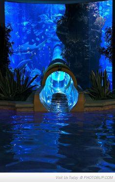 Water Slide Through Shark Tank In Vegas. Awesome!!!