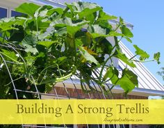 Building A Strong Trellis, grow cantaloupes, melons, squash, gourds, climbers, vegetables grow upright on stake or post, vining plants,