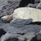 www.tripadvisor.com AttractionProductDetail-g2219999-d11454349-Big_Island_in_One_Day_Volcanoes_Waterfalls_Sightseeing_and_History_Small_Group_Tour-Kohala_Coast_Island_of_Hawaii_Hawaii.html
