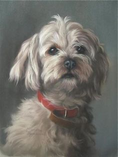 'Daisy Dog' by guest artist Maxine Thompson from the Exhibition Images | Pastel Artists of New Zealand #OilPaintingDog