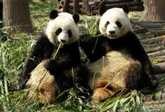 Endangered species - Threatened species - ESL Resources