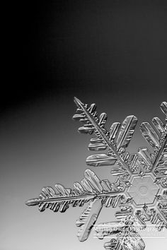 Extreme macro view of a real snowflake photographed in situ through a microscope in Anchorage, Alaska. Snowflake Photography, Winter Photography, Macro Photography, Snowflake Wallpaper, Snowflake Photos, Winter Wallpaper, Christmas Wallpaper, Crystal Snowflakes, Real Snowflakes