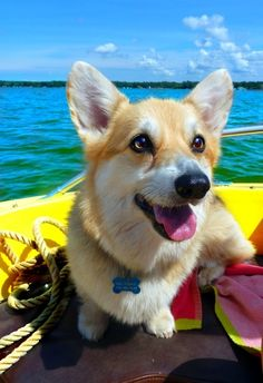 Boating-is-my-favourite 12 Dogs Enjoying The Summer Season