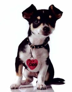 Maggie's Crochet · Fashion Dog #crochet #pattern #dog #sweater #cute #warm #scarf #collar #knit #sew #fashion