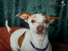 Cate Goedert Photography located in Santa Fe, NM specializes in pet photography.