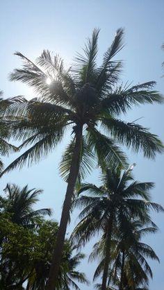 Palm tree Raya island