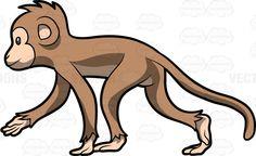 #animal #Animalia #Aotidae #arms #Atelidae #Callitrichidae #campuchin #Cebidae #Cercopithecidae #Chordata #forest #hair #hairy #haplorhine #Haplorhini #happy #jungle #legs #longtail #mammal #Mammalia #monkey #monkeykingdom #paraphyleticgroup #Pitheciidae #primate #primates #rainforest #smile #smiling #stride #striding #tail #timberland #walk #walking #woodland #zoo #vector #clipart #stock