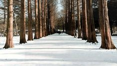Richard Clayderman - Love song in winter (Winter Sonata)