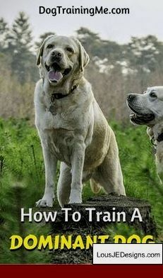 Best Way To Train A Protection Dog And Pics Of Best Way To Train A