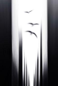 "elinka: "" Oblivion by Marzena Wieczorek "" Monochrome Photography, Black And White Photography, Minimalist Photography, Contemporary Photography, World Photography, Color Photography, Conceptual Photography, Holocaust Memorial, Photo B"