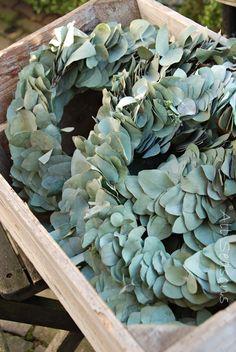 Eucalyptus kransjes. Bron: All seasons