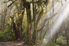 Traumort des Tages: Nebelwald auf La Gomera - [GEO]  #lagomera #kanaren #wandern