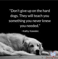 My life of saving cats and dogs while always looking for ways to save cash Puppy Quotes, Dog Quotes Love, Animal Quotes, Save Animals Quotes, Quotes About Dogs, Dog Best Friend Quotes, Pet Quotes, Animal Facts, I Love Dogs