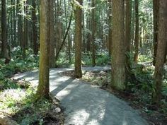 Hidden Grove Trail.   Length of trails vary from a short 15 minute walk to other trails of 3 - 4 km. in length, most a minimal challenge for walkers.  The entrance is approx. 4 km. past the Provincial Park in Sechelt Inlet.  This trail offers a unique combination of ancient giant trees, maple wetlands and rocky promontories.  Views of Sechelt Inlet and Vancouver Island. East Of The Sun, Giant Tree, Jet Plane, Sunshine Coast, Walking In Nature, Vancouver Island, Hiking Trails, Forests, Walks