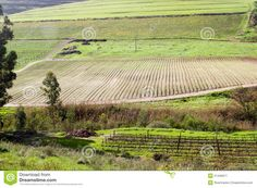 Photo about Green valley and hill rural farm landscape with vineyard and crop fields. Image of vines, south, plants - 21446917