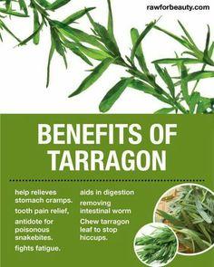 Benefits of tarragon