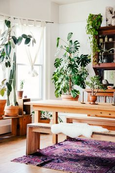 Could These Stunning Plants Be the Next Fiddle Leaf Fig? via @mydomaine