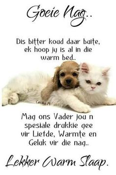 Evening Greetings, Afrikaanse Quotes, Goeie Nag, Goeie More, Warm Bed, Good Night Sweet Dreams, Sleep Tight, Day Wishes, Good Morning Quotes