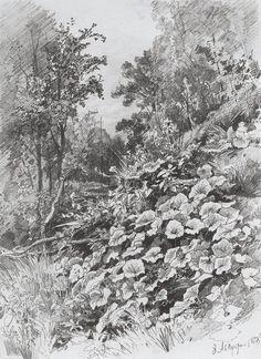 Coltsfoot, 1878 Ivan Shishkin