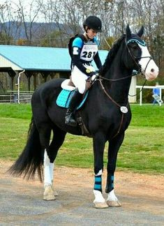 In the start box. Cross country In the start box. Cross country In the start box. Cross country In t Cute Horses, Pretty Horses, Horse Love, Beautiful Horses, Animals Beautiful, Horse Stables, Horse Tack, Pretty Animals, Cute Animals