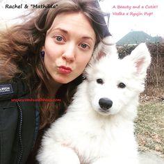 white shepherd berger blanc suisse shepherd white swiss shepherd