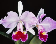 Orchids, Orchid Flowers, Ways To Show Love, Most Beautiful Flowers, Orchid Care, All Plants, Botany, Flower Power, 3