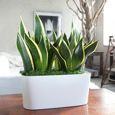 5 pretty houseplants that will help clean the air | Home & Decor Singapore