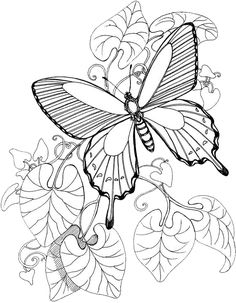 Butterfly Coloring Pages 3 | Purple Kitty http://purplekittyyarns.com/coloring-pages/butterfly-coloring-page3