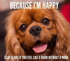 ♫ Because I'm happy. Clap along if you feel like a room without a woof. ♫