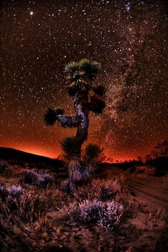 Night sky, Joshua Tree at National Park, California, United States