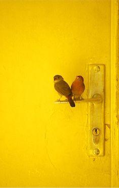 DesertRose,;,sweet yellow,;,